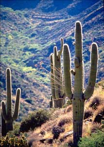 agua fria national monument cactus