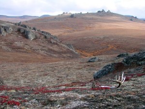bering land bridge photos